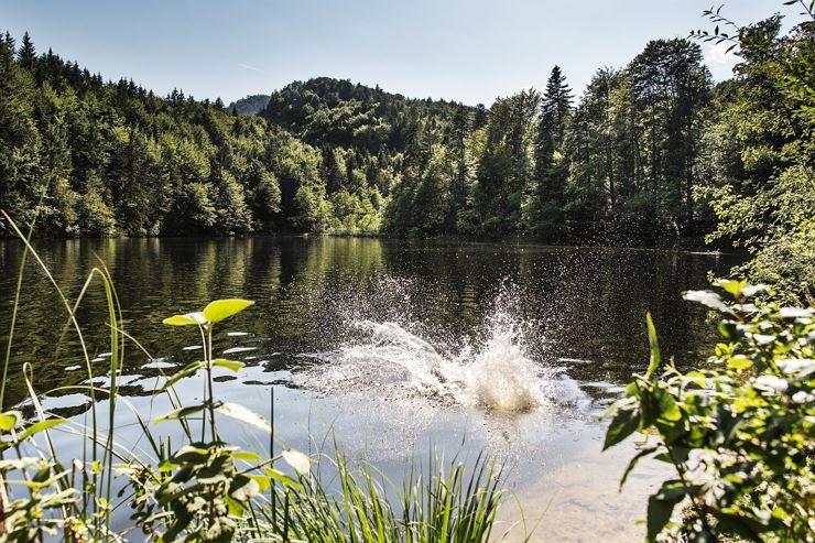 Lakes-forest walk & impulses from nature